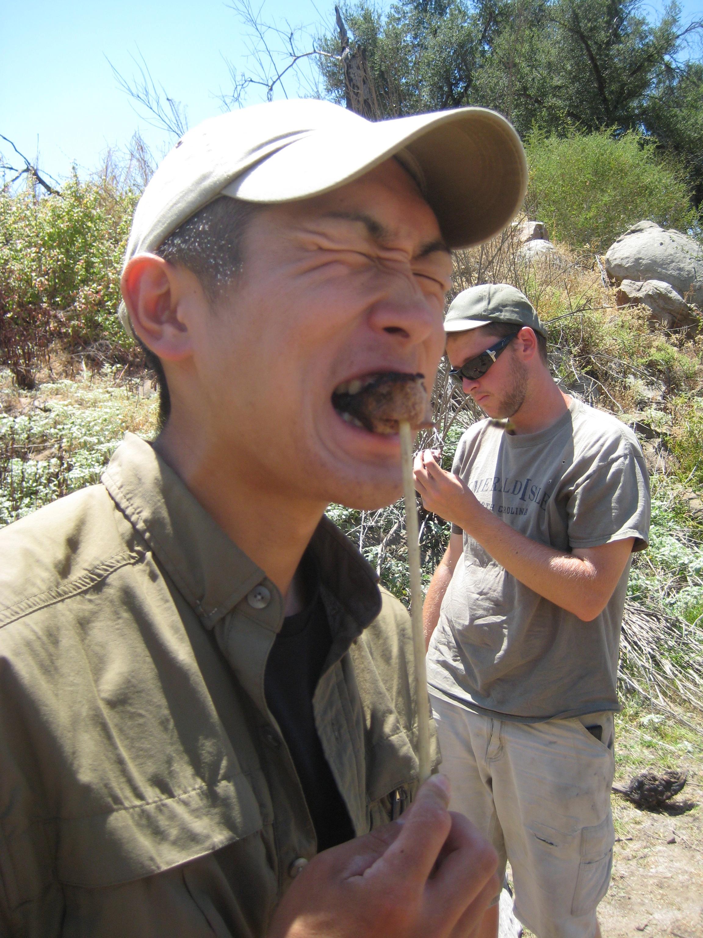 Eating Coyote Natural Skills